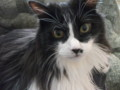 [猫] おニューのジャージ乗り心地チェック