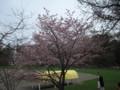 [札幌] 円山公園のようすその2