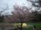 円山公園のようすその2