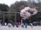 北海道神宮 入口