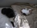 [猫] ひなたぼっこ