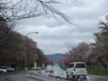 [新ひだか] 二十間道路 桜並木入口