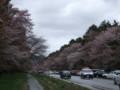 [新ひだか] 桜まつり イベント会場付近