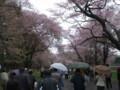 [新ひだか] 桜のトンネル 入口