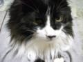 [猫] 石抱きの刑の体制