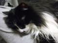 [猫] 石抱きの刑執行