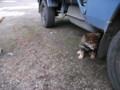 [千歳][温泉][動物] 祝梅温泉 温泉犬