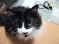 [猫] えらい勢いで説教