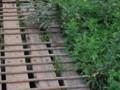 [雨竜][雨竜沼湿原][動物] エゾシマリス