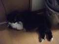 [猫] ここが涼しいのにゃ