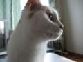 [猫] どアップ