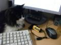 [猫] キーボードが汚いにゃ