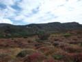 [上川][大雪山] 雲の平草紅葉その3