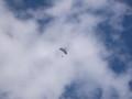[美瑛][十勝岳] 未確認飛行物体