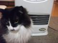 [猫] 朝はここがあったかかったにゃ