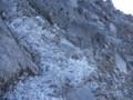 [倶知安][羊蹄山] 霜柱にょきにょき