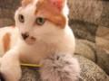 [猫] ホワイトバランスがおかしいにゃ
