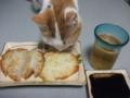 [猫] ぺろり