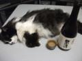 [猫] ねこ見酒