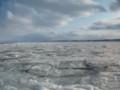 [網走] 流氷帯へ