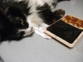 [猫] 食べきれないくせに狩ってくるにゃ