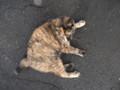 [豊富][温泉][動物][猫] サビさんの見送りサービス