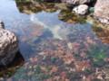 [小樽] 海草のアクアリウム・1