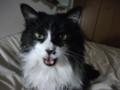 [猫] ものすごい勢いで怒られる