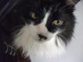 [猫] …(白い目)
