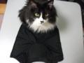 [猫] 「尿漏れパンツにゃ」「違います」