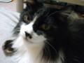 [猫] 久々の石抱きの刑