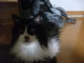 [猫] 「またいきなり写真にゃ」