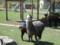 子アルパカ授乳中@アルパカ牧場