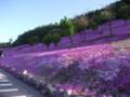 [滝上] 芝桜@滝上公園 その2