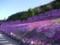 芝桜@滝上公園 その2