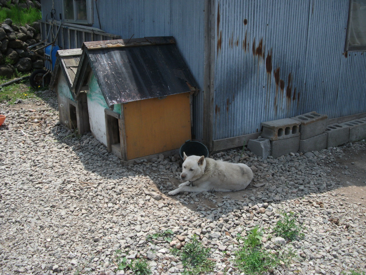 モッタ海岸温泉 温泉犬