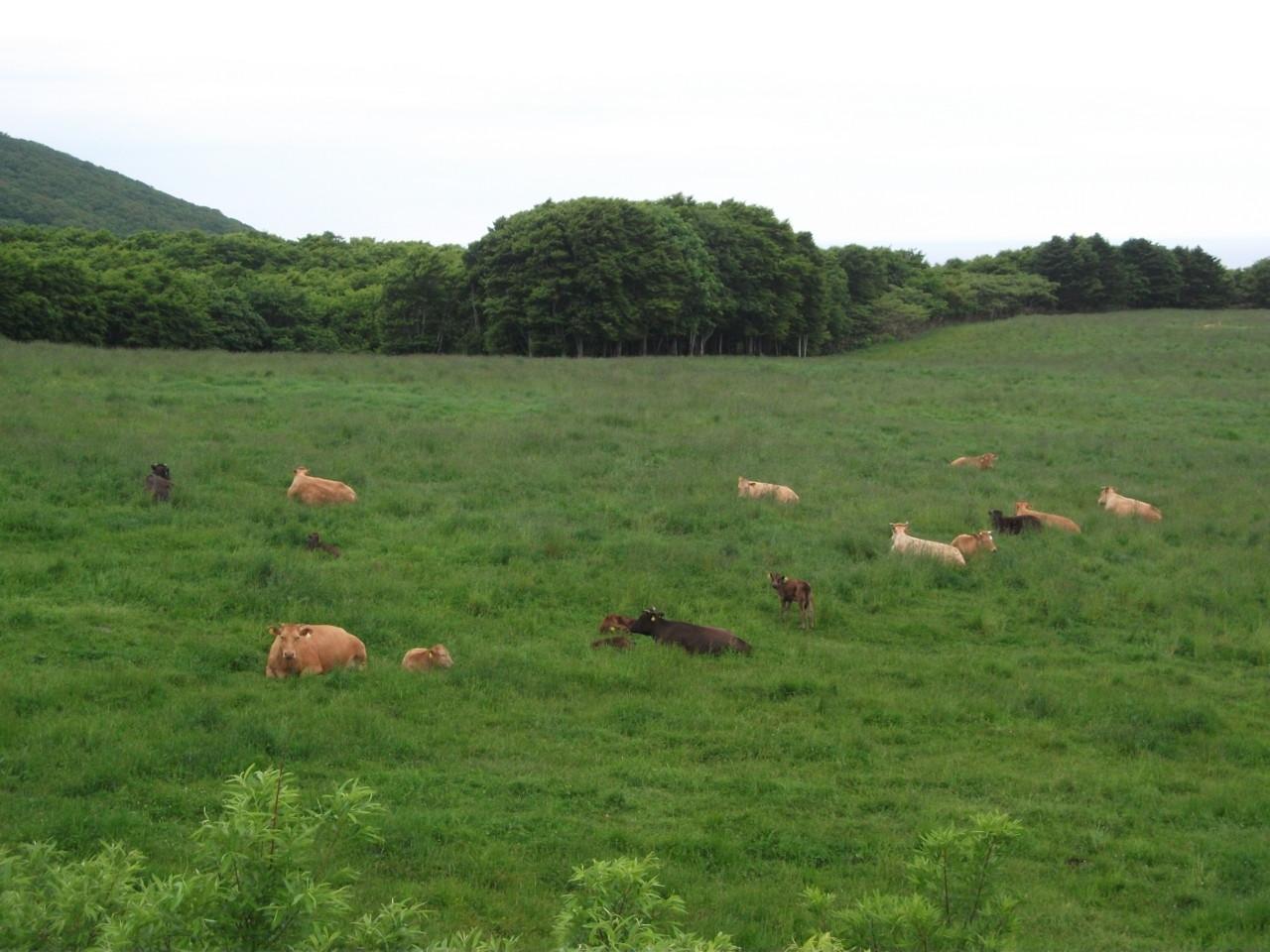 のんびり休む牛くんたち