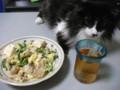 [猫] へんなもの食ってるにゃ
