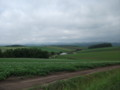 [美瑛] 丘の風景