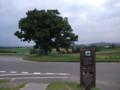 [美瑛] セブンスターの木