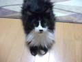 [猫]びっくり顔