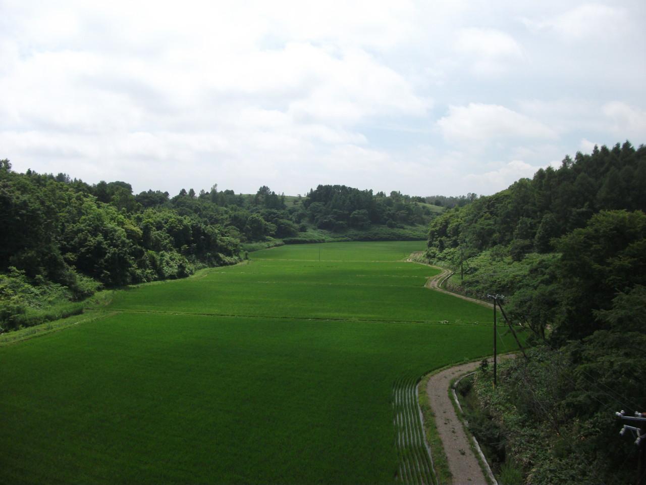 高富貯水池を利用した水田