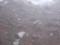 8合目山小屋 謎の野鳥(イワヒバリorカヤクグリ)その1