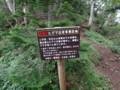 [斜里][羅臼岳] 熊頻出地帯へ突入