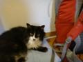 [猫] なんでデカいザック準備してるにゃ
