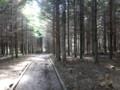 [羽幌][天売島] うっそうとした植林地帯