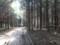 うっそうとした植林地帯