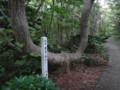 [羽幌][焼尻島] 珍木「天狗の腰掛け」