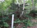 [羽幌][焼尻島] 珍木「歓喜木」