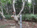[羽幌][焼尻島] 奇木「エゾ鹿」